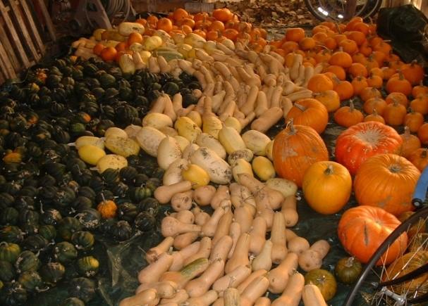 beautiful veggies